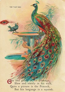 postcard from the early 1900s, inspiration for a transgendered bird